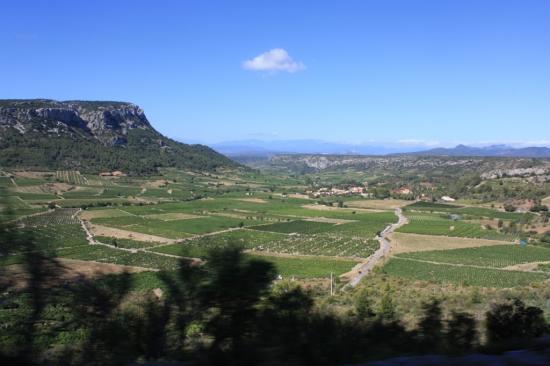 Vignes et travail des vignerons