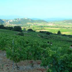 Vignes vue sur la vallée